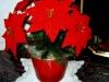 Häkelblumen Topf 3